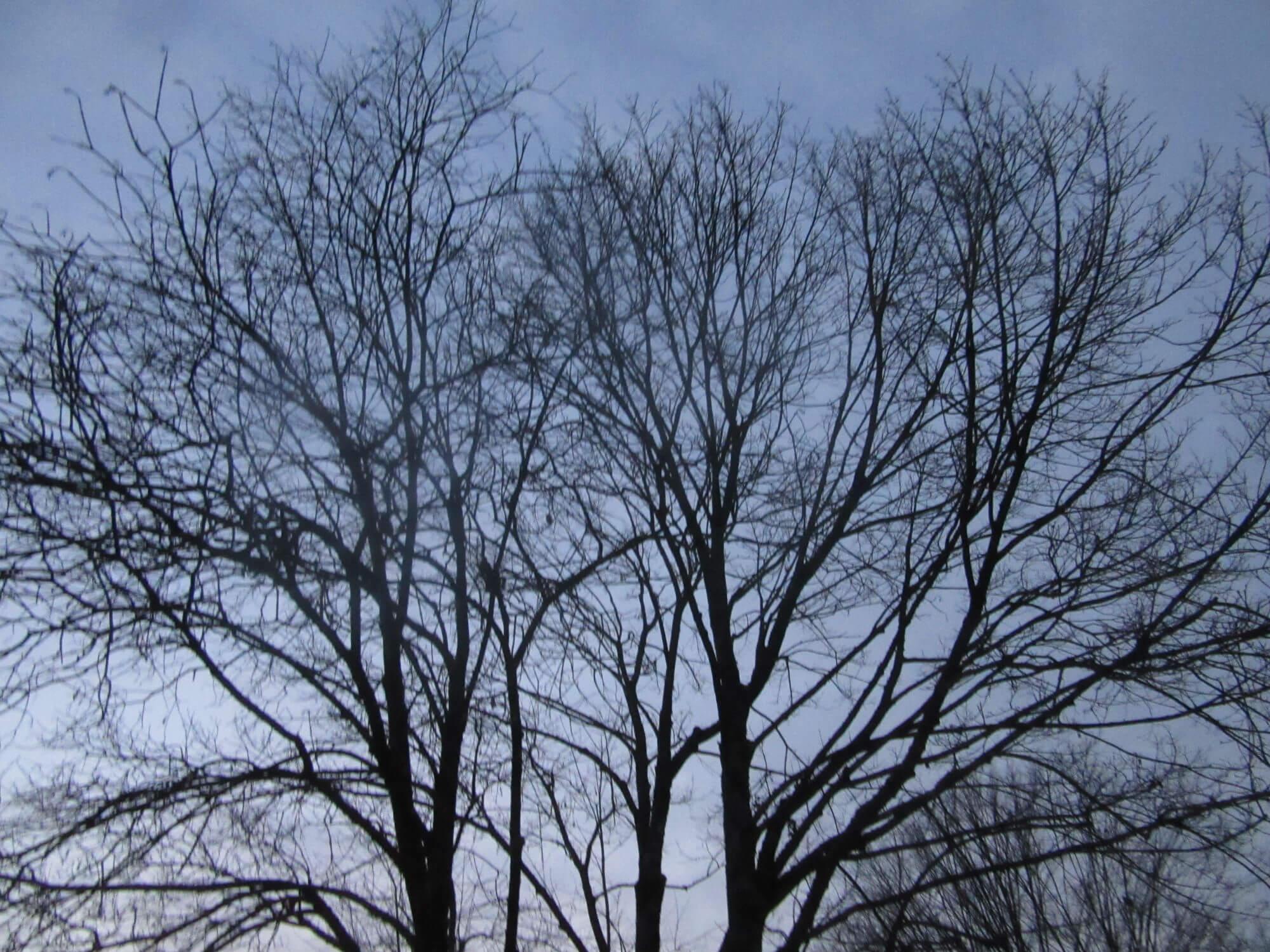 Ravnanje z drevjem