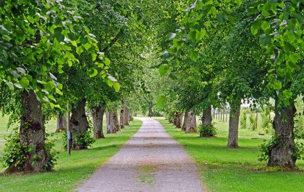 Zbiramo zgodbe dreves in vabimo na okroglo mizo o skrbi za drevesa v mestih