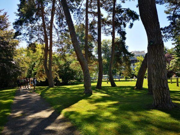 Veliko zanimanje in skrb za mestna drevesa