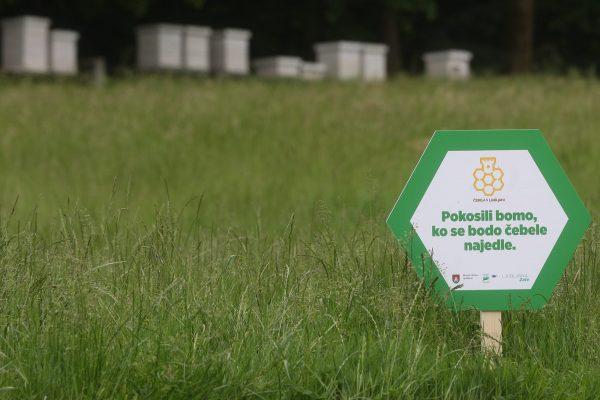 Mesta mestom: »Pokosili bomo, ko se bodo čebele najedle«